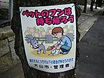 Japan017.jpg