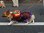 tokyo-halloween-parade-2006-128.jpg