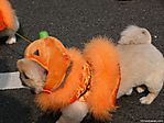 tokyo-halloween-parade-2006-131.jpg