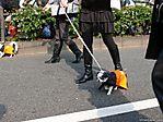 tokyo-halloween-parade-2006-135.jpg