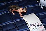 Tokyo-Wonderfest-2007-202.jpg