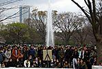 Cherry-Blossoms-2007-Yoyogi-Park-Tokyo-002.jpg