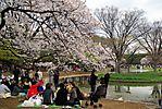 Cherry-Blossoms-2007-Yoyogi-Park-Tokyo-003.jpg