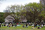 Cherry-Blossoms-2007-Yoyogi-Park-Tokyo-005.jpg
