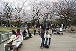 Cherry-Blossoms-2007-Yoyogi-Park-Tokyo-007.jpg