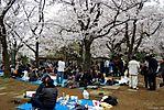 Cherry-Blossoms-2007-Yoyogi-Park-Tokyo-008.jpg