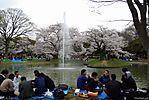 Cherry-Blossoms-2007-Yoyogi-Park-Tokyo-009.jpg