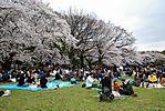 Cherry-Blossoms-2007-Yoyogi-Park-Tokyo-014.jpg