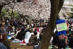 Cherry-Blossoms-2007-Yoyogi-Park-Tokyo-015.jpg