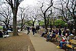 Cherry-Blossoms-2007-Yoyogi-Park-Tokyo-016.jpg
