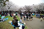 Cherry-Blossoms-2007-Yoyogi-Park-Tokyo-022.jpg