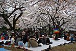 Cherry-Blossoms-2007-Yoyogi-Park-Tokyo-027.jpg