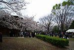 Cherry-Blossoms-2007-Yoyogi-Park-Tokyo-032.jpg