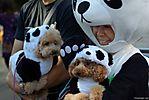 Harajuku-Pumpkin-Parade-2007-044.jpg