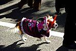 Harajuku-Pumpkin-Parade-2007-086.jpg