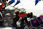 Harajuku-Pumpkin-Parade-2007-087.jpg