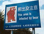 Bear-Infestation.jpg
