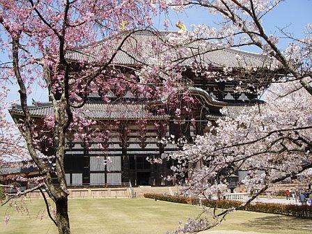 temple_flower