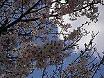 blossoms_2.jpg